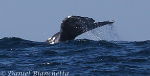 Full Day whale watching trips